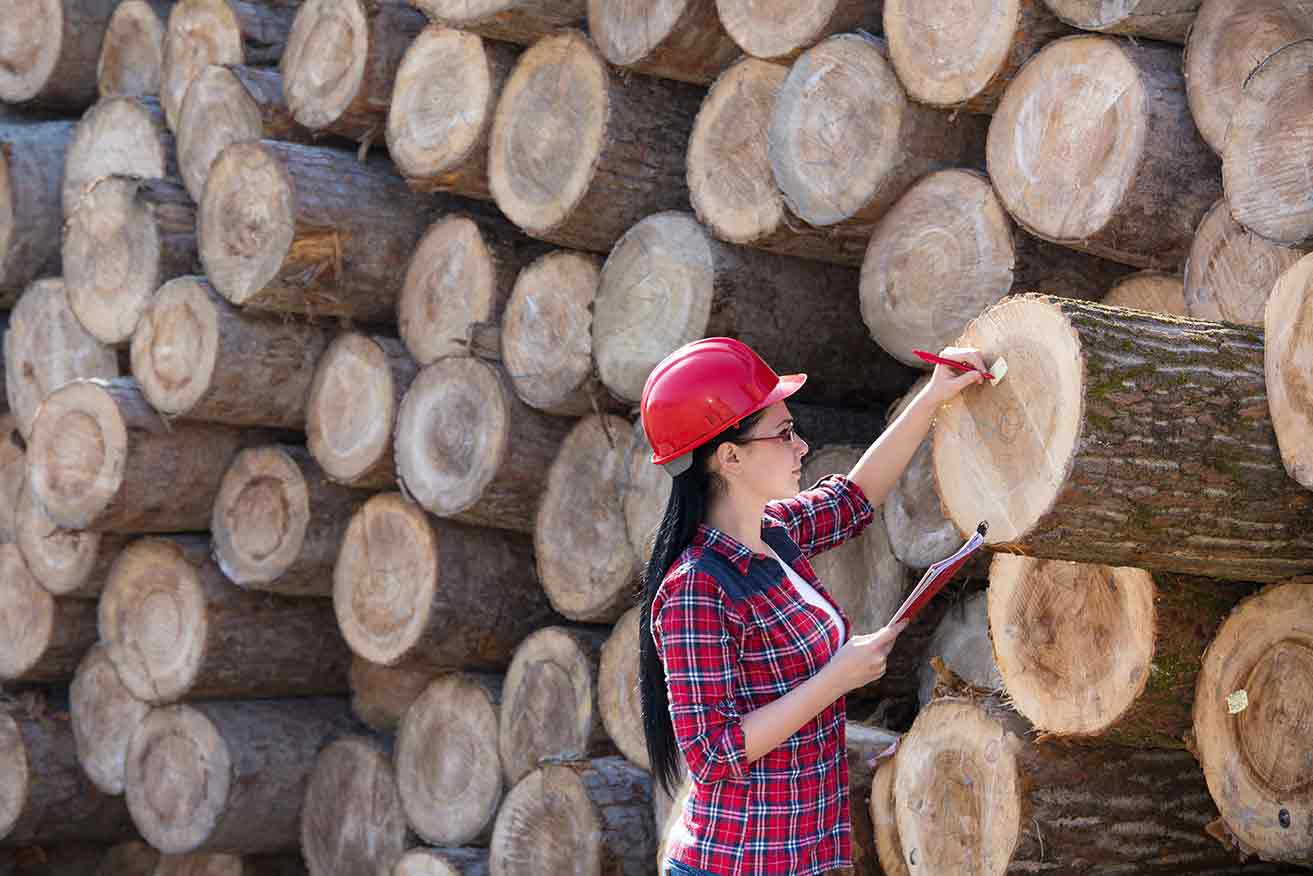 Wood production worker checking log pile